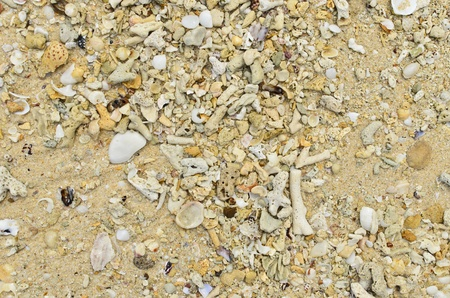 Sea shells and sand at koh kradan, trang, thailand photo