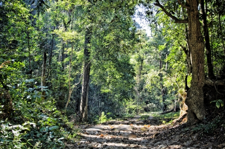Beautiful Rain Forest  Doi suthep , chiang mai, Thailand