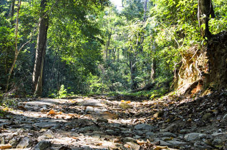 Beautiful Rain Forest  Doi suthep , chiang mai, Thailand photo