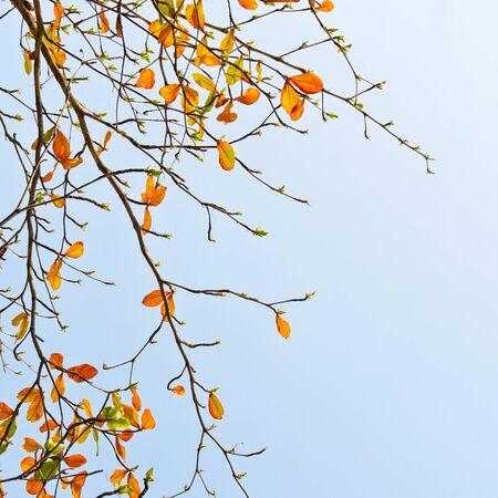 fall leaves on blue sky