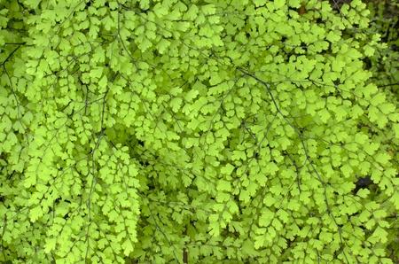 green fern texture