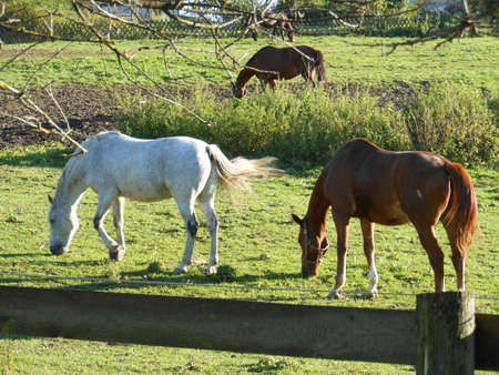 those: A nice clear Day with those Horses