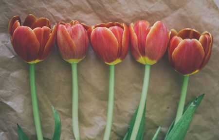 craft paper: tulip bouquet - five tulips in a row on craft paper wrapping
