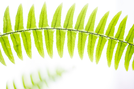 spring fresh plant smooth fern abstract background photo