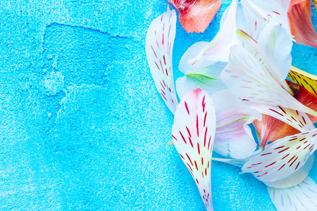 bunch of color petals on blue background