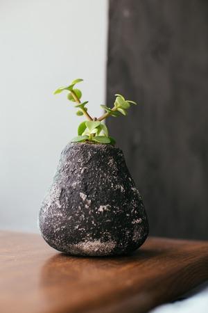 Succulents in concrete pot. Scandinavian hipster home decoration