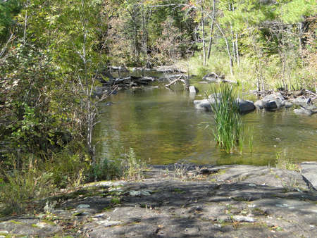 Pool formed by Dam in woodland streamriver. Turtle in the water on the left.                                photo