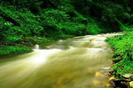 greeen: greeen stream