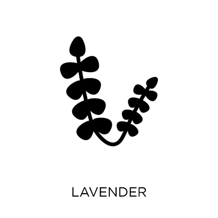Lavender icon. Lavender symbol design from Nature collection. Simple element vector illustration on white background. Banque d'images - 111619792