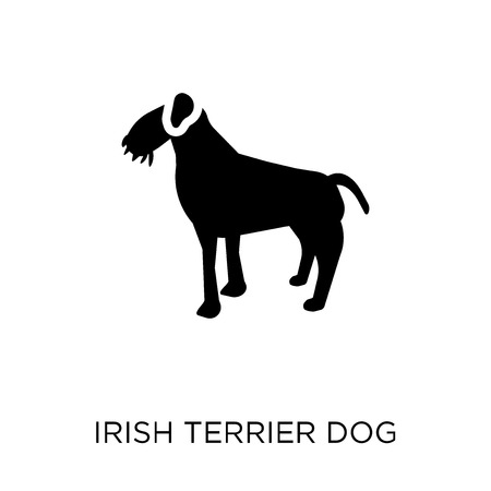 Irish Terrier dog icon. Irish Terrier dog symbol design from Dogs collection. Simple element vector illustration on white background. Illustration