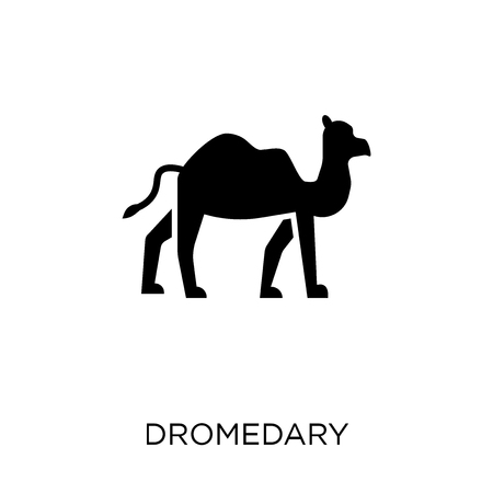 Dromedary icon. Dromedary symbol design from Desert collection. Simple element vector illustration on white background.