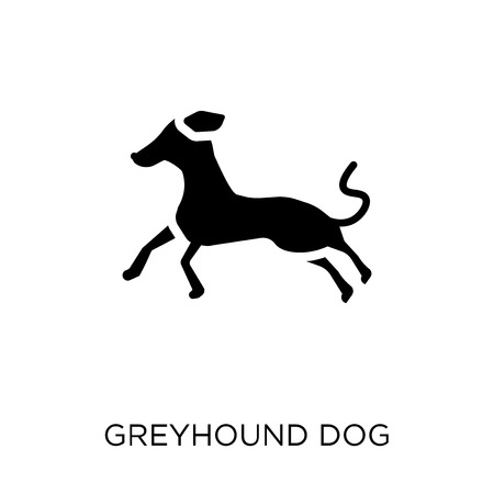 Greyhound dog icon. Greyhound dog symbol design from Dogs collection. Simple element vector illustration on white background.