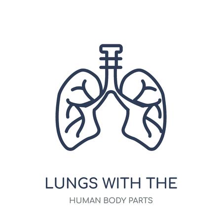Polmoni con l'icona della trachea. Polmoni con il disegno di simbolo lineare di trachea dall'insieme di parti del corpo umano.