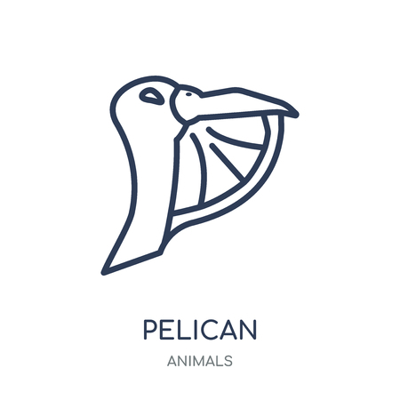 Pelican icon. Pelican linear symbol design from Animals collection. Simple outline element vector illustration on white background.