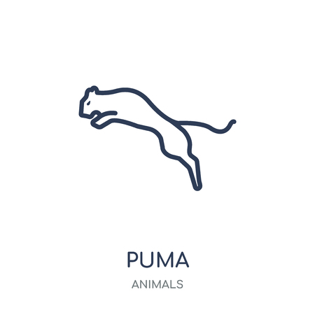 puma icon. puma linear symbol design from Animals collection. Simple outline element vector illustration on white background.