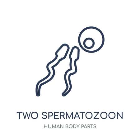 Two Spermatozoon icon. Two Spermatozoon linear symbol design from Human Body Parts collection.