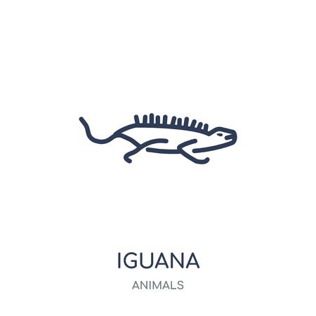 iguana icon. iguana linear symbol design from Animals collection. Simple outline element vector illustration on white background.