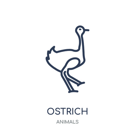 Ostrich icon. Ostrich linear symbol design from Animals collection. Simple outline element vector illustration on white background. Ilustração