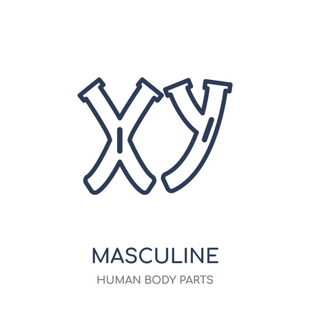 Icono de cromosomas masculinos. Diseño de colección de partes del cuerpo humano en cromosomas masculinos símbolo lineal. Ilustración de vector