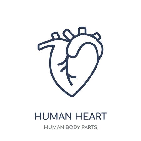Icona del cuore umano. Disegno di simbolo lineare del cuore umano dall'insieme di parti del corpo umano. Vettoriali