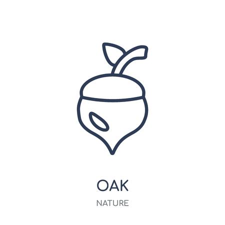 Eiche-Symbol. Eiche lineares Symboldesign aus der Nature-Kollektion. Einfache Entwurfselementvektorillustration auf weißem Hintergrund.
