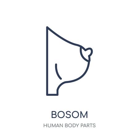 Bosom icon. Bosom linear symbol design from Human Body Parts collection.