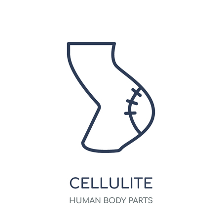 Cellulite icon. Cellulite linear symbol design from Human Body Parts collection. Illustration