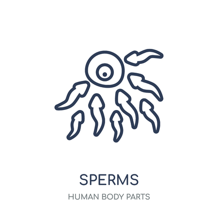 Sperms icon. Sperms linear symbol design from Human Body Parts collection.