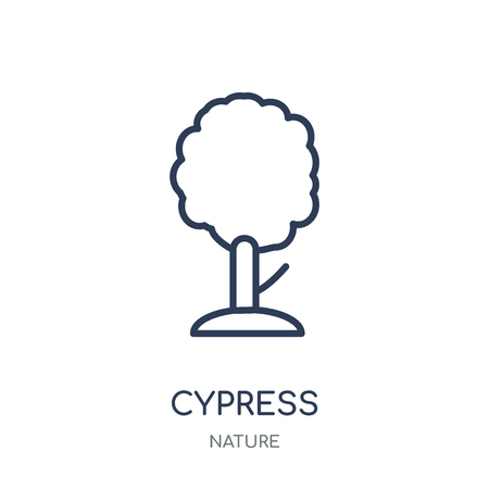 Cypress icon. Cypress linear symbol design from Nature collection. Simple outline element vector illustration on white background. Ilustracja