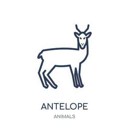 Antelope icon. Antelope linear symbol design from Animals collection. Simple outline element vector illustration on white background. Illustration