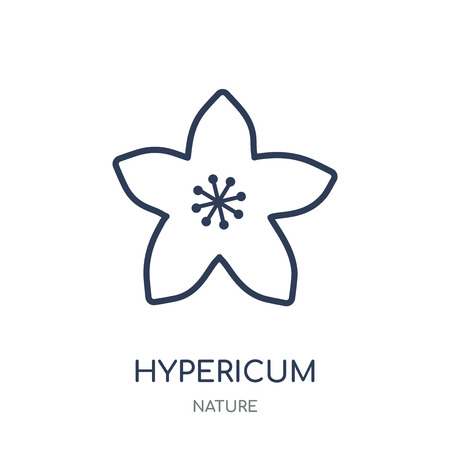 Hypericum icon. Hypericum linear symbol design from Nature collection. Simple outline element vector illustration on white background.