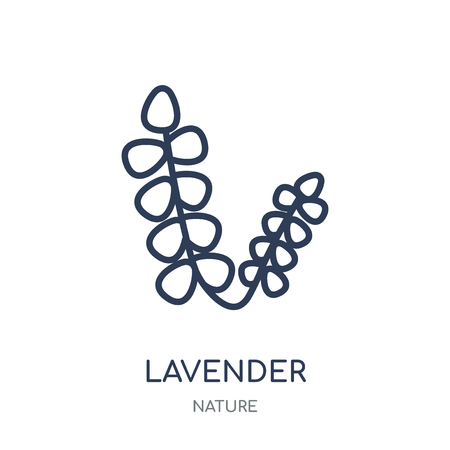 Lavender icon. Lavender linear symbol design from Nature collection. Simple outline element vector illustration on white background. Banque d'images - 111822074