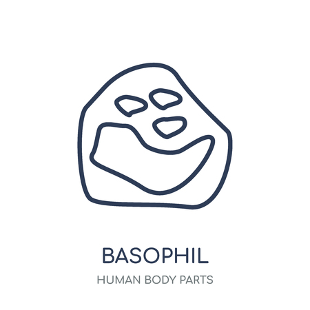 Basophil icon. Basophil linear symbol design from Human Body Parts collection. Stock Vector - 111822076