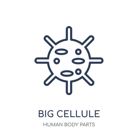 Big Cellule icon. Big Cellule linear symbol design from Human Body Parts collection. Ilustração