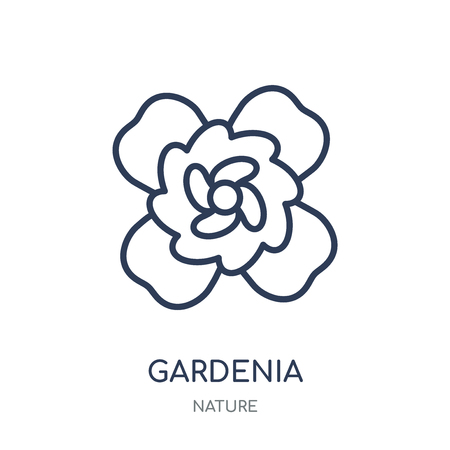 Gardenia icon. Gardenia linear symbol design from Nature collection. Simple outline element vector illustration on white background.