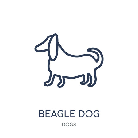 Beagle dog icon. Beagle dog linear symbol design from Dogs collection. Simple outline element vector illustration on white background.