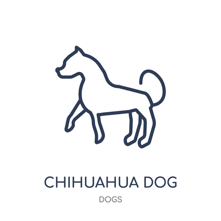 Chihuahua dog icon. Chihuahua dog linear symbol design from Dogs collection. Simple outline element vector illustration on white background.
