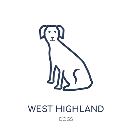 West Highland White Terrier dog icon. West Highland White Terrier dog linear symbol design from Dogs collection. Simple outline element vector illustration on white background.