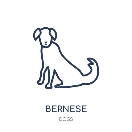 Bernese Mountain dog icon. Bernese Mountain dog linear symbol design from Dogs collection. Simple outline element vector illustration on white background.