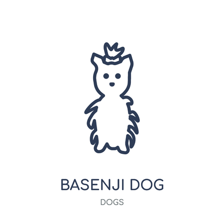 Basenji dog icon. Basenji dog linear symbol design from Dogs collection. Simple outline element vector illustration on white background.