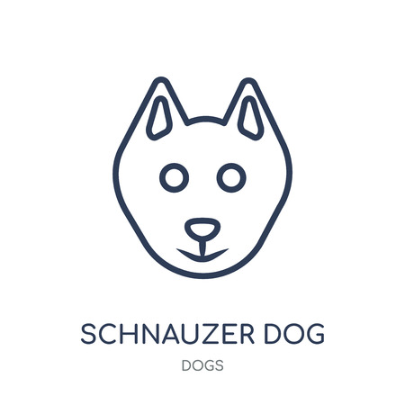 Schnauzer dog icon. Schnauzer dog linear symbol design from Dogs collection. Simple outline element vector illustration on white background.