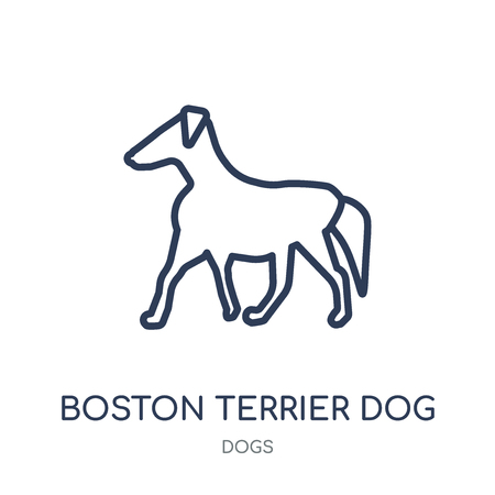 Boston Terrier dog icon. Boston Terrier dog linear symbol design from Dogs collection. Simple outline element vector illustration on white background. 矢量图像