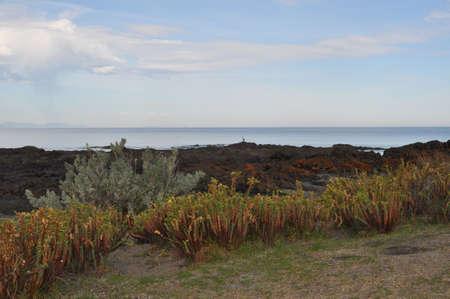 gully: Rocky beach, Bear Gully, Gippsland