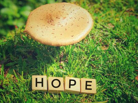 Motivational and inspirational word - HOPE written on wooden blocks. Stockfoto