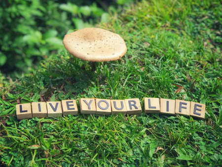 Motivational and inspirational wording - Live Your Life written on wooden blocks. Imagens