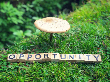 Motivational and inspirational word - OPPORTUNITY written on wooden blocks.
