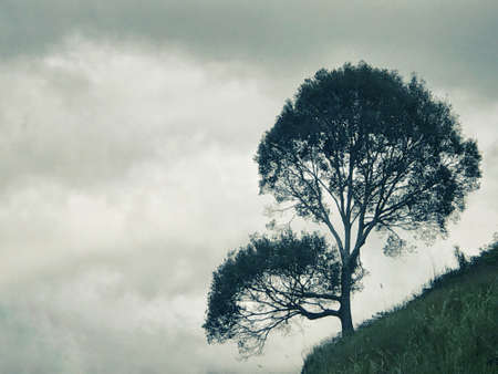 Silhouette of a tree by the hill. Stock Photo