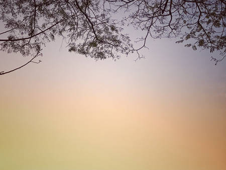 Tree branches and morning sky background.