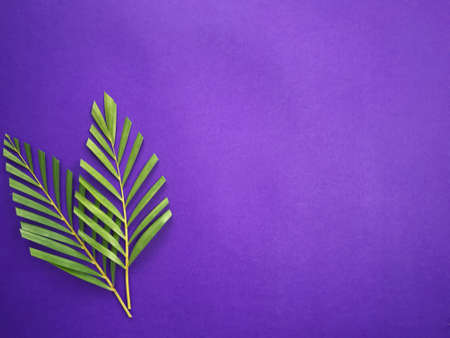 Good Friday, Palm Sunday, Ash Wednesday, Lent Season and Holy Week concept. Palm leaves on purple background.