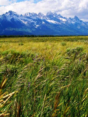 buffalo grass: Buffalo Grass and Tetons in Grand Teton National Park, Wyoming